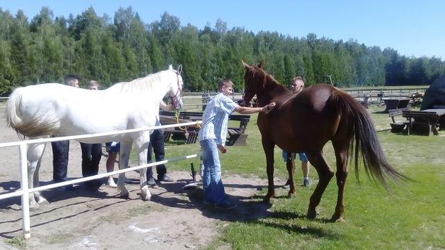 Zajęcia wterenie - czyszczenie koni